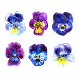 Collection of six beautiful watercolor Pansy, hand-drawn illustration set for your design. vector illustration