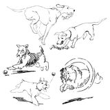 A collection of sketches breed dogs.  hand drawings. Animal concept. A set of drawings of different breeds dogs in motion. Games with dogs for a walk. Hand Royalty Free Stock Images