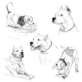 A collection of sketches breed dogs. Isolated hand drawings. Animal concept. A set of drawings of adult dog and puppy. Highly detailed. Hand drawing sketch Royalty Free Stock Photography