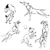 A collection of sketches breed dogs. Isolated hand drawings. Animal concept. A set of drawings of different breeds dogs in motion. Games with dogs for a walk Royalty Free Stock Images