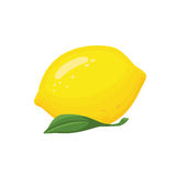 Collection of sliced lemons.Vector Fresh lemon with leave Illustration. Stock Images