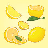 Collection of sliced lemons. Vector illustration Royalty Free Stock Images