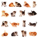 Collection of small cats. Isolated in white background Royalty Free Stock Photography