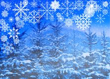 Snowflakes collection on blue snowy trees background stock photos