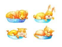 Collection, sommeil jaune domestique d'animaux d'ensemble dans les paniers bleus à l'arrière-plan blanc illustration libre de droits