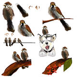 Collection of  sparrow Stock Image