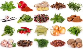 Collection of spices and herbs. Isolated on white background royalty free stock photography