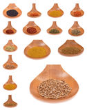Collection  spices Stock Image