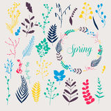 Collection of spring flowers, leaves, dandelion, grass. Design f Royalty Free Stock Images