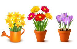 Collection of spring and summer colorful flowers i stock illustration