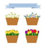 Collection of spring and summer colorful flowers Royalty Free Stock Image