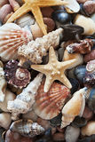 Collection of starfish and seashells Royalty Free Stock Photos