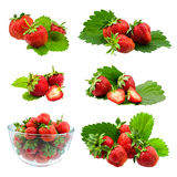 Collection of strawberries Royalty Free Stock Photography