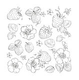 Collection of strawberries elements Stock Photos