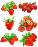 Collection of strawberries on white. Isolated Stock Photography