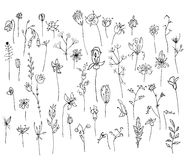 Collection with stylized forest flowers and herbs isolated on white. Black and white silhouette. Stock Photography