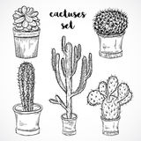 Collection of succulent plants and cactuses in pots. Black and white hand drawn vector illustration Royalty Free Stock Images