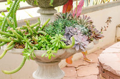 Collection of succulent plants in vintage flower pots Stock Photo
