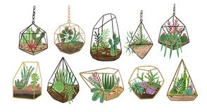 Collection of succulents, cactuses and other desert plants growing in various glass vivariums or florariums. Stylish vector illustration