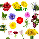 Collection of summer flowers Royalty Free Stock Images