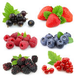 Collection of sweet berries Royalty Free Stock Photos