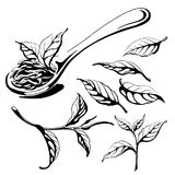 Collection of tea leaves. Stock Photo