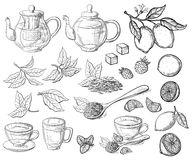 Collection of tea leaves. Green, black, Pekoe tea in graphic style, hand-drawn vector illustration stock illustration
