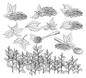Collection of tea leaves. Royalty Free Stock Photos