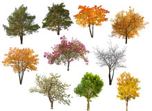 Collection of ten isolated trees Stock Image