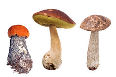 Collection of three edible mushrooms on white Stock Photography