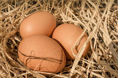 Nest with three eggs Royalty Free Stock Photography