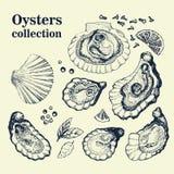 Collection tirée par la main de vecteur d'huîtres Image stock