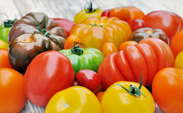 Collection of tomatoes Stock Photography