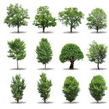 Collection Tree Stock Image