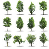 Collection tree Royalty Free Stock Photo