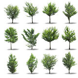 Collection Tree Royalty Free Stock Images