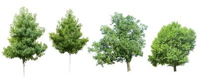 Collection of Tree. Isolated on a white background Royalty Free Stock Images