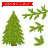 Collection Of Tree Elements. Vector Stock Photography