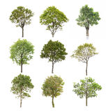 Collection tree isolated on white Stock Photos