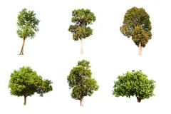 Collection tree isolated on white background Royalty Free Stock Photos