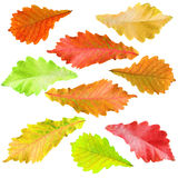Collection of tree leaves Royalty Free Stock Images