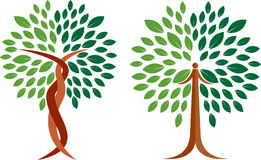 Collection tree logo. Illustration art of a collection tree logo with isolated background Stock Photography
