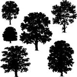 Collection of tree vectors Stock Photography