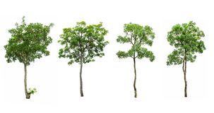 Collection of tree. On white background Royalty Free Stock Photography