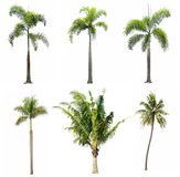 Collection of tree on white background Royalty Free Stock Image
