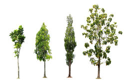Collection of tree on white background Royalty Free Stock Photo
