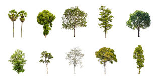 Collection of Tree on a white background Stock Photo