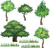 Collection Of Trees. Isolated On White Background, Vector Illustration Royalty Free Stock Photo