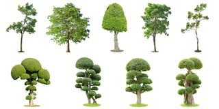 The collection of trees and bonsai tree isolated on white background. Its shrub is grown in a pot or ornamental tree in. The garden royalty free stock photography