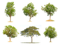 Collection trees of isolated Royalty Free Stock Images